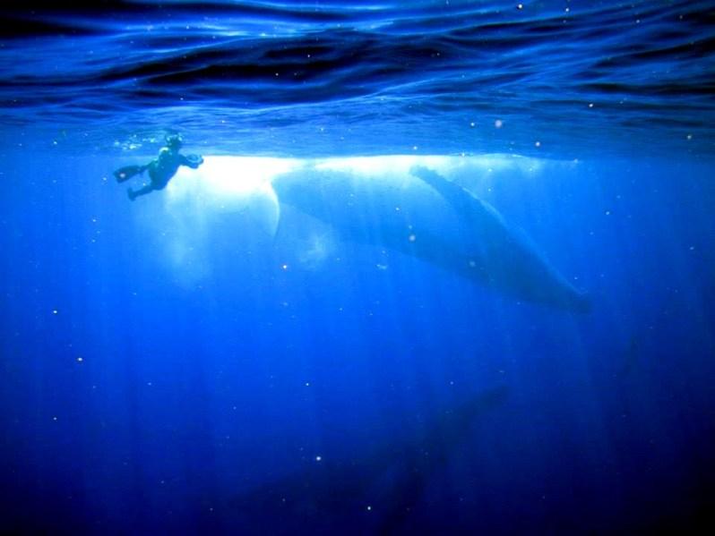 marine_biologist_pic1
