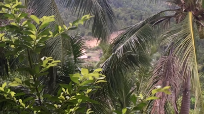 Surprise Sighting From Our Front Porch in Thailand(ELEPHANTS!)