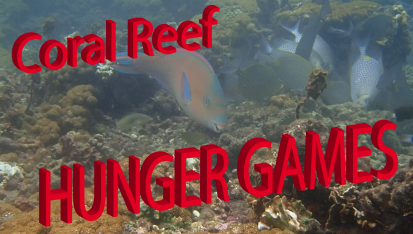 Coral Reef HUNGER GAMES in Thailand