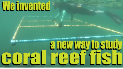 We invented a new way to study coral reeffish!