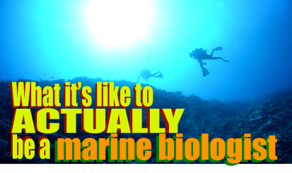 What it's like to ACTUALLY be a marine biologist