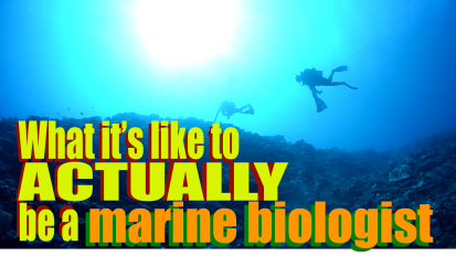 What it's like to ACTUALLY be a marinebiologist