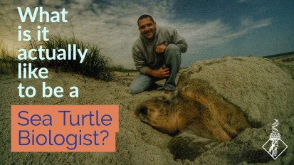 What is it ACTUALLY like to be a sea turtle biologist?
