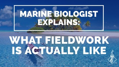 Marine Biologist explains what fieldwork is ACTUALLY like