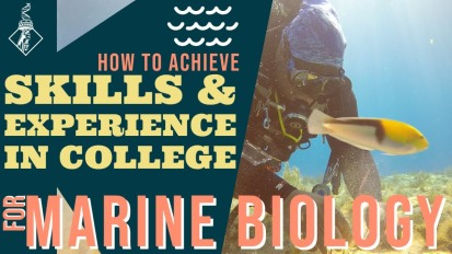 How to achieve skills & experience in college for Marine Biology