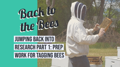 Jumping back into research: Prep work for beetagging