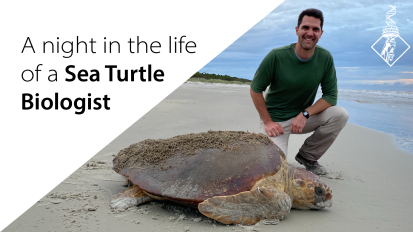 A Night in the Life of a Sea TurtleBiologist